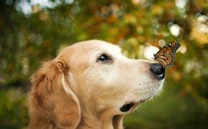 244785__adorable-dog_p