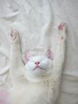 l-I-surrender-my-cuteness